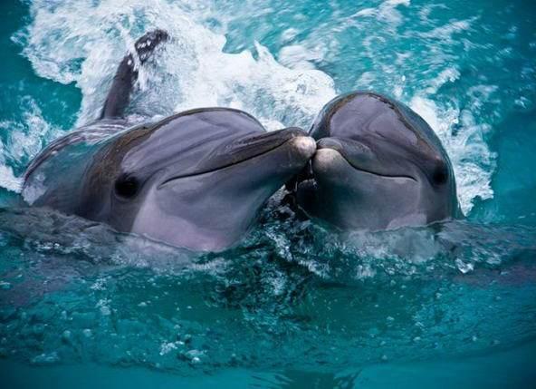 дельфинарий Немо Бердянск курорт